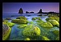 Picture Title - Seastone Green!