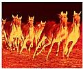Picture Title - Horses Burt Slenna.