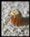 Picture Title - Tiny Spider