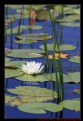 Picture Title - Pond Colours