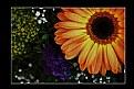 Picture Title - Floreal Composition