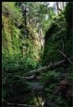Picture Title - Magical Fern Canyon