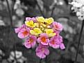 Picture Title - Florecitas