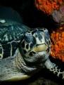 Picture Title - Mr. Turtle