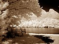 Picture Title - Summertones