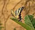 Picture Title - foglie....