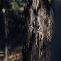 Picture Title - among the gum trees 2