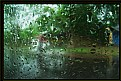 Picture Title - In The Rain #4
