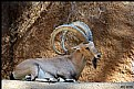 Picture Title - IBEX