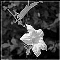 Picture Title - Flora #6