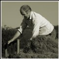 Picture Title - Making Hay 3