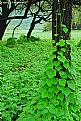 Picture Title - green