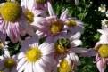 Picture Title - Pollen Harvest