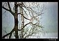 Picture Title - ..::Parallel Universe::..