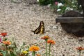 Picture Title - Butterfly in a Beautiful Garden