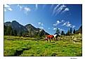 Picture Title - Wonderful World