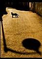 Picture Title - Sokak Lambasi ve Kedi