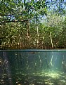Picture Title - Mangroves at Hungry Bay - 2 worlds