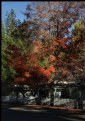 Picture Title - Gold Country Autumn