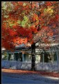 Picture Title - Gold Country Autumn II