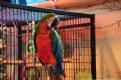 Picture Title - Parrot