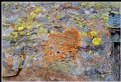 Picture Title - A palette on stone