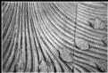 Picture Title - A parametric bundle of curves