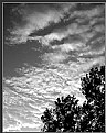 Picture Title - skies...