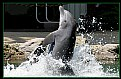 Picture Title - dolphin