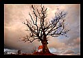 Picture Title - Tree against the sky