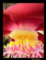 Picture Title - Exotic Flower IV
