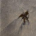 Picture Title - crash landing