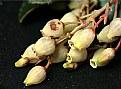 Picture Title - Piccoli fiori