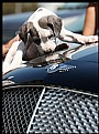 Picture Title - bentley
