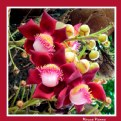 Picture Title - Exotic Flower V