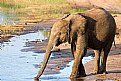 Picture Title - Elephant on the Riverbank