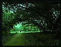 Picture Title - Journey in dream