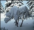Picture Title - Shades of Winter