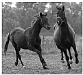 Picture Title - Running horses (Emotions ser.)