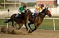 Picture Title - Horse Race