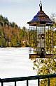 Picture Title - Still winter