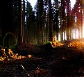 Picture Title - Enchanted woods