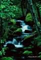 Picture Title - Watson Creek