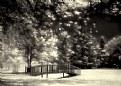 Picture Title - Romantic Dreams