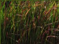 Picture Title - Grass