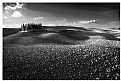 Picture Title - Val d'Orcia