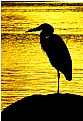 Picture Title - Sunset Heron