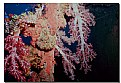 Picture Title - Soft Coral Colors