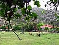 Picture Title - Goat Farm