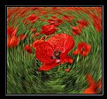 Picture Title - The poppy in the cyclone